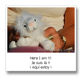 Little white lion-baby - here I am!