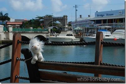 Löwenbaby im Hafen von Bridgetown