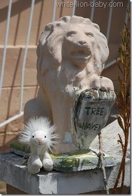 Löwenbaby mit steinerndem Löwen