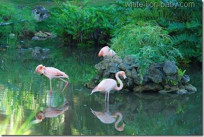 Flamingos im Garten