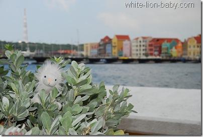 Löwenbaby vor der bekannten bunten Häuserzeile in Willemstad