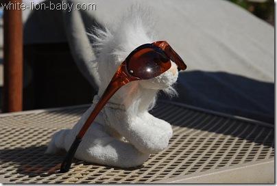 Löwenbaby mit Sonnenbrille