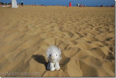 Kleines, weißes Löwenbaby auf großem, großem Strand