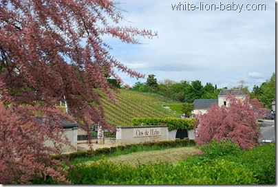 Weinhang in Chinon