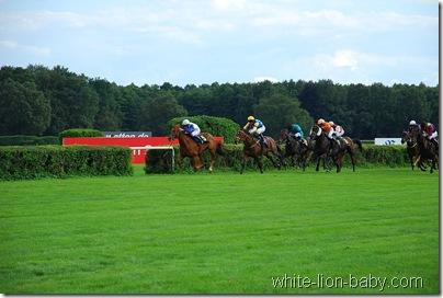 Rennpferde vor dem Einlaufen