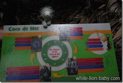 Auf der Tafel wird die Entstehung der Seychellenpalme erklärt