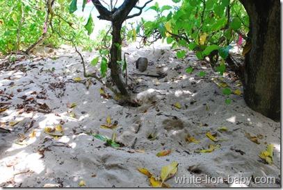 Eiablageplatz einer Wasserschildkröte
