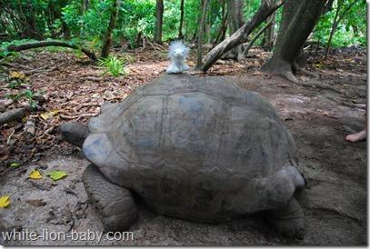 Noch ein Schildkrötenritt!
