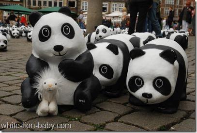 Erster Panda-Kontakt