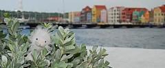 On Curaçao